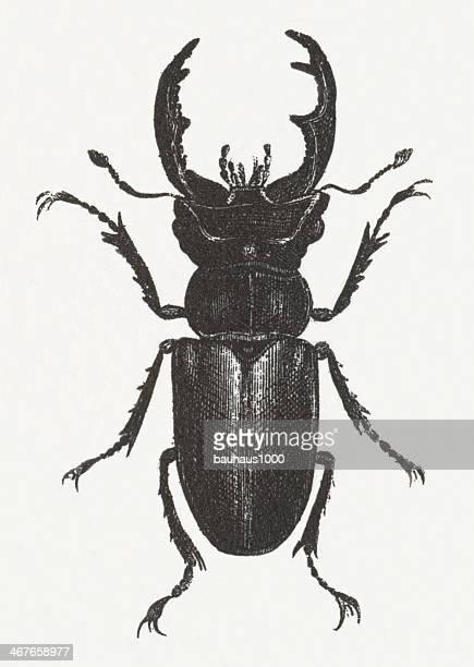 Stag Beetle Engraving