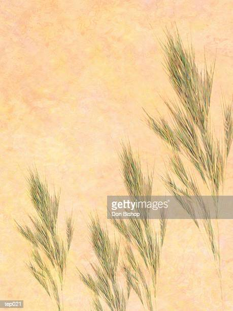 stalks of grain - plant attribute stock illustrations, clip art, cartoons, & icons