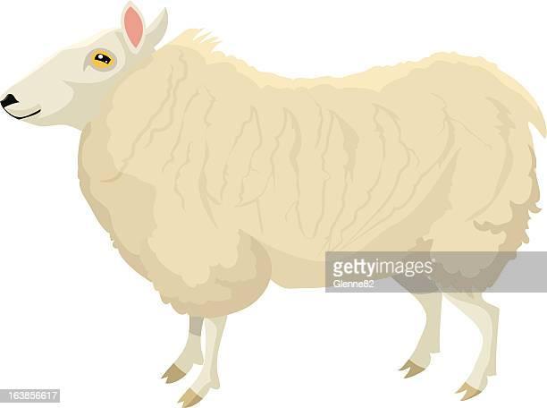 standing sheep - sheep stock illustrations, clip art, cartoons, & icons