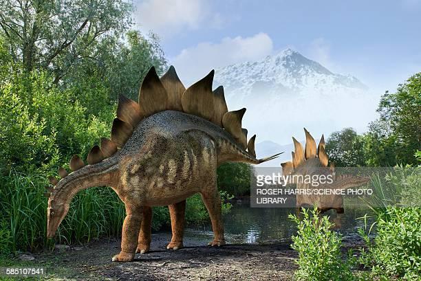 stegosaur dinosaurs, illustration - dinosaur stock illustrations