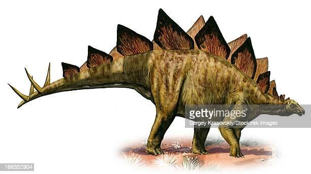 stegosaurus armatus, a prehistoric era dinosaur from the late jurassic period. - thyreophora stock illustrations, clip art, cartoons, & icons