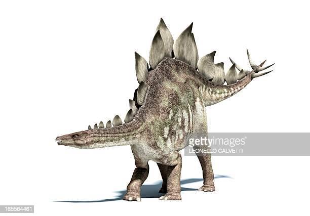 stegosaurus dinosaur, artwork - jurassic stock illustrations