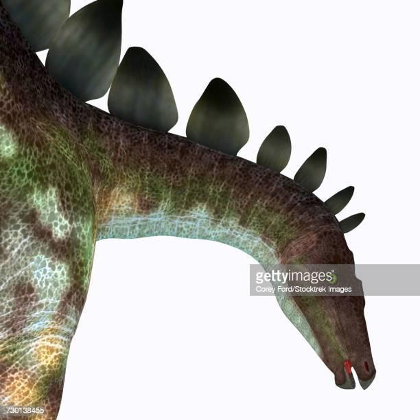 Stegosaurus dinosaur head.