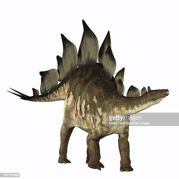 stegosaurus dinosaur - thyreophora stock illustrations, clip art, cartoons, & icons