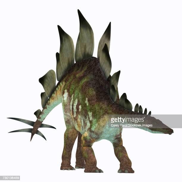 stegosaurus dinosaur on white background. - thyreophora stock illustrations, clip art, cartoons, & icons