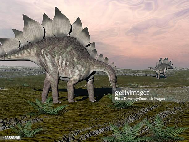 ilustraciones, imágenes clip art, dibujos animados e iconos de stock de stegosaurus dinosaurs grazing on plants. - triásico