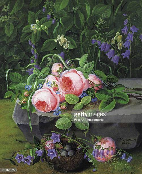 still life with roses and bluebells - archival stock illustrations