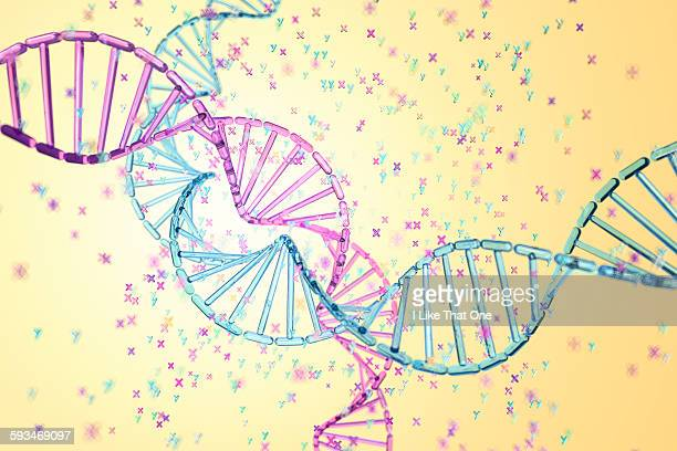 dna strands depicting gender choice chromosomes - atomic imagery stock illustrations