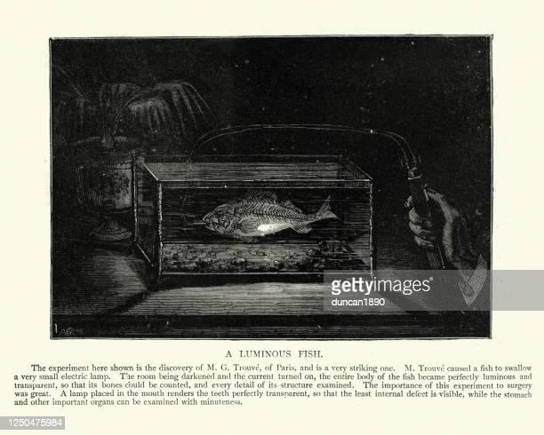 電灯を浅くする魚の奇妙な実験 - 放射線技師点のイラスト素材/クリップアート素材/マンガ素材/アイコン素材