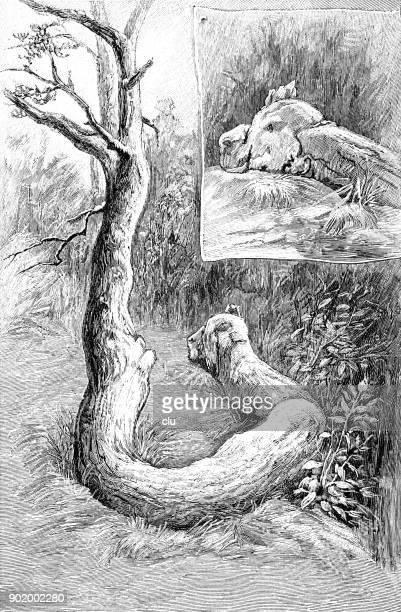 Strange trees: a giant snake pine
