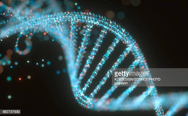 dna structure, illustration - dna stock illustrations