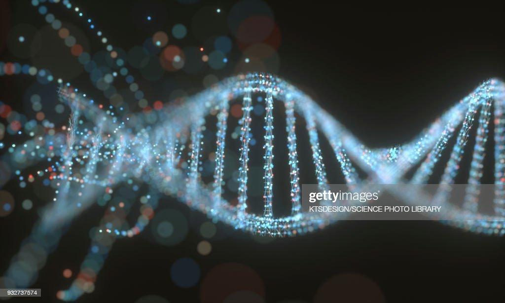 DNA structure, illustration : stock illustration
