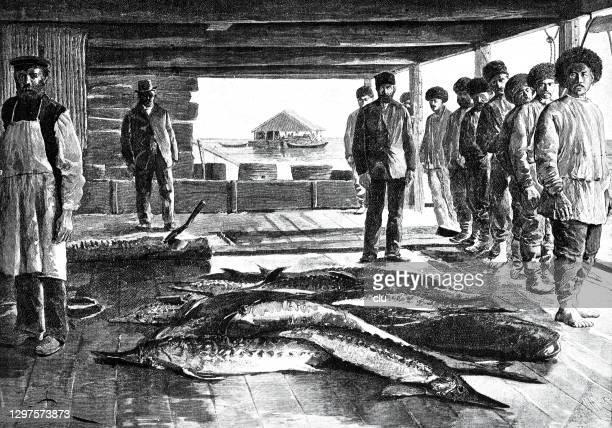 sturgeon skinning workshop - sturgeon fish stock illustrations