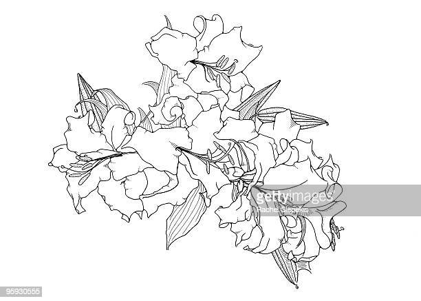 stylized casablanca lilies - floral pattern stock illustrations