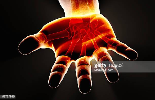 stockillustraties, clipart, cartoons en iconen met stylized view of a an open palmed hand with the bones visible. - images