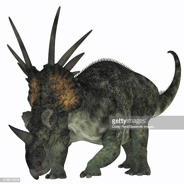 Styracosaurus, a herbivorous ceratopsian dinosaur from the Late Cretaceous Period.