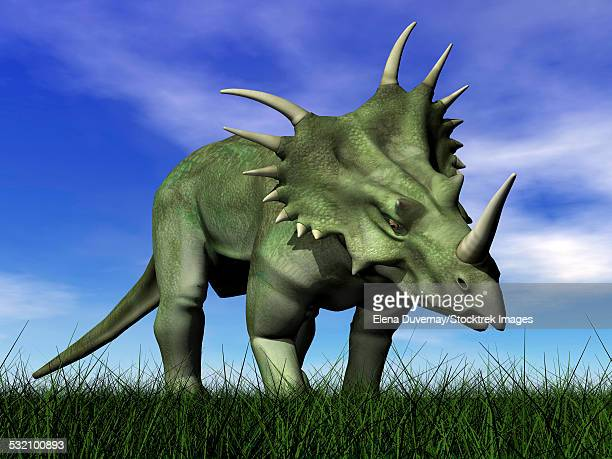 styracosaurus dinosaur walking in the grass. - animal body stock illustrations, clip art, cartoons, & icons