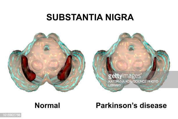 substantia nigra and dopaminergic neurons, illustration - neuroscience stock illustrations