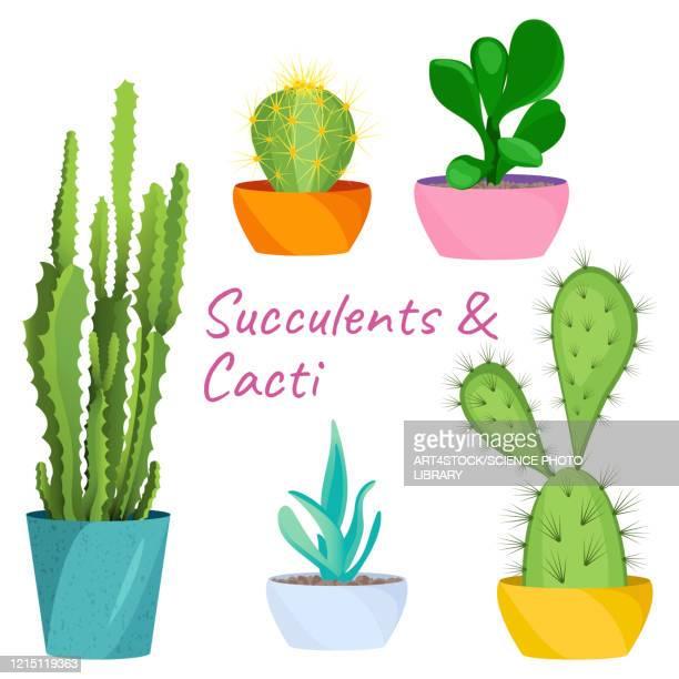 succulents and cacti, illustration - 尖っている点のイラスト素材/クリップアート素材/マンガ素材/アイコン素材