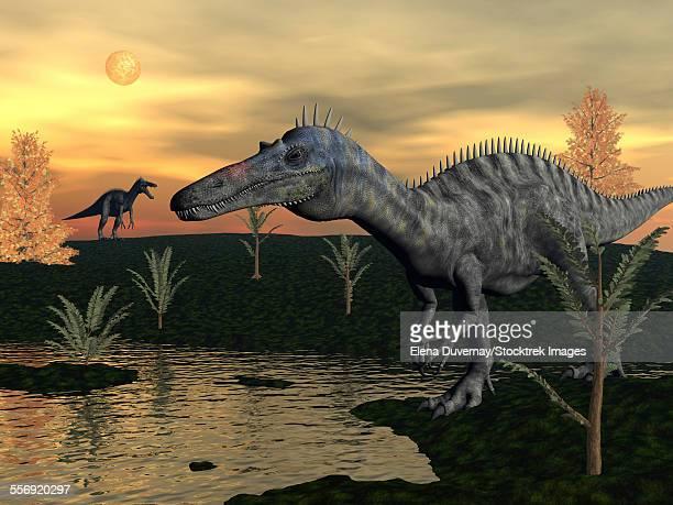 ilustraciones, imágenes clip art, dibujos animados e iconos de stock de suchomimus dinosaurs walking next to pond at sunset with pachypteris and bald cypress trees. - paleozoología