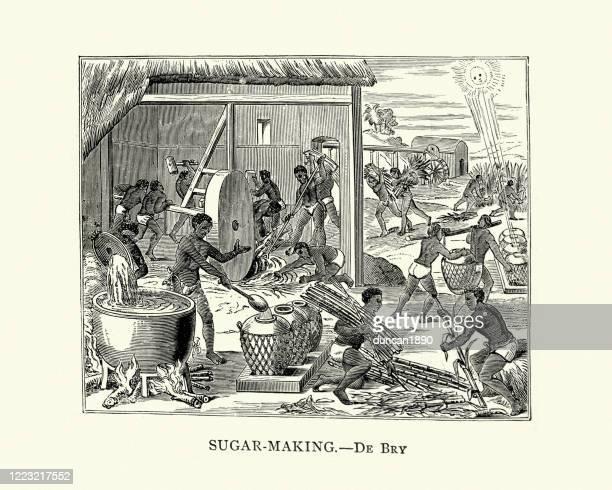 stockillustraties, clipart, cartoons en iconen met het maken van suiker in cuba, 16de eeuw - brits west indië