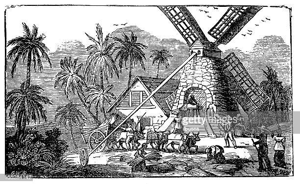 Sugar production industry: Mill