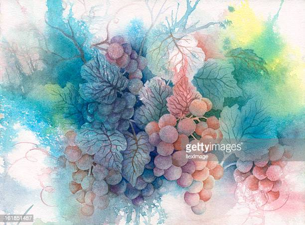 summer grapes - wine stock illustrations