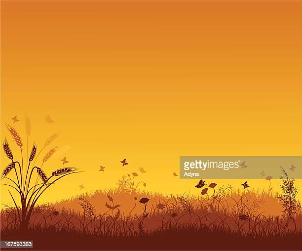 summer landscape - zea stock illustrations, clip art, cartoons, & icons