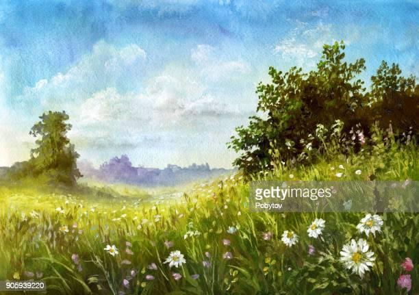 ilustraciones, imágenes clip art, dibujos animados e iconos de stock de prado de verano, acuarela pintura - manzanilla