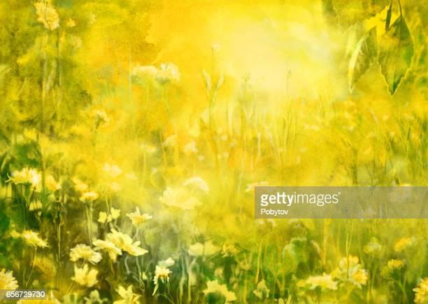 ilustraciones, imágenes clip art, dibujos animados e iconos de stock de sol de verano, acuarela pintura - manzanilla