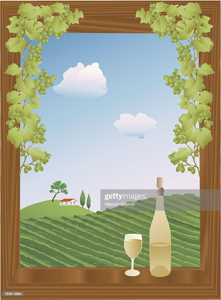summer vineyard