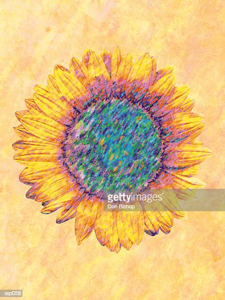 sunflower - plant attribute stock illustrations, clip art, cartoons, & icons