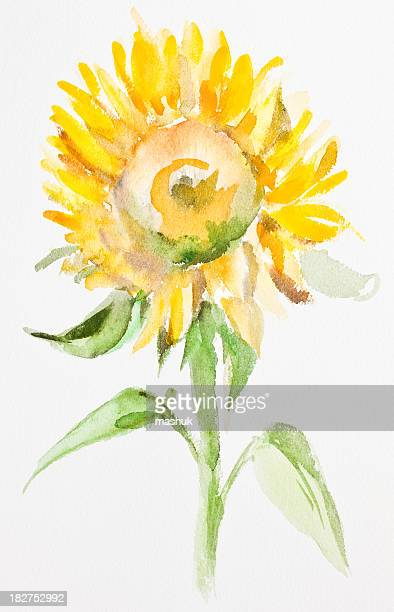 sunflower, watercolor painting - sunflower stock illustrations, clip art, cartoons, & icons