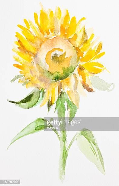 ilustraciones, imágenes clip art, dibujos animados e iconos de stock de girasol, pintura de acuarela - girasol