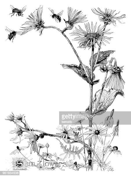 sunflowers - art and craft stock illustrations