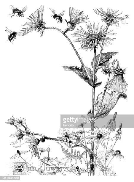 illustrations, cliparts, dessins animés et icônes de tournesols - abeille