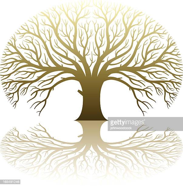 sunlit large tree - family tree stock illustrations, clip art, cartoons, & icons