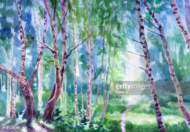sunny summer landscape in a birch grove. watercolor. - grove stock illustrations, clip art, cartoons, & icons