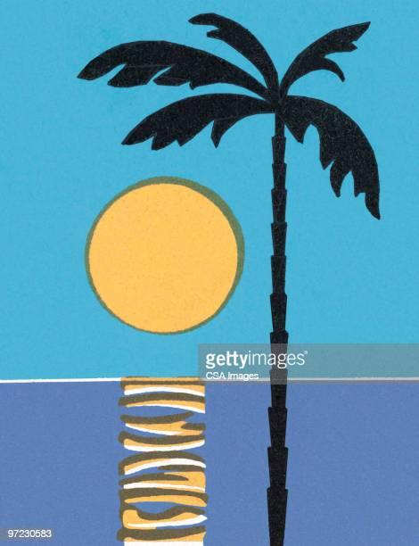 sunset - image stock illustrations