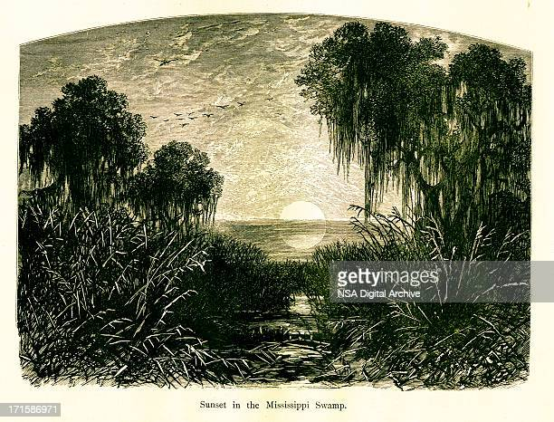 Sunset in Mississippi Swamp, USA