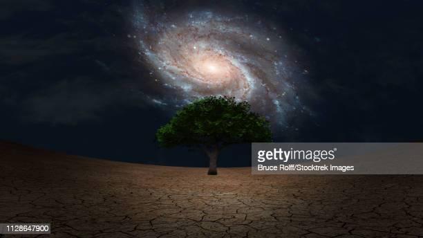 ilustraciones, imágenes clip art, dibujos animados e iconos de stock de surrealism. green tree in arid land. galaxy in night sky. - galaxiaespiral