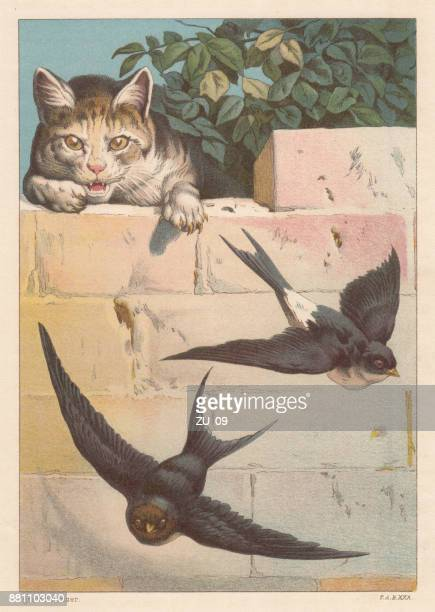 Swallows and cat, lithograph, published in 1884
