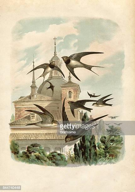 illustrations, cliparts, dessins animés et icônes de hirondelles qui nous arrivent de 1881 illustration de l'été - hirondelle