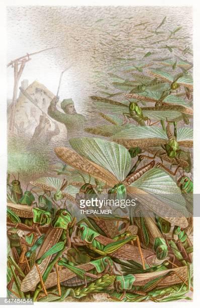 bildbanksillustrationer, clip art samt tecknat material och ikoner med svärm av grashoppers chromolithograph 1884 - litografi