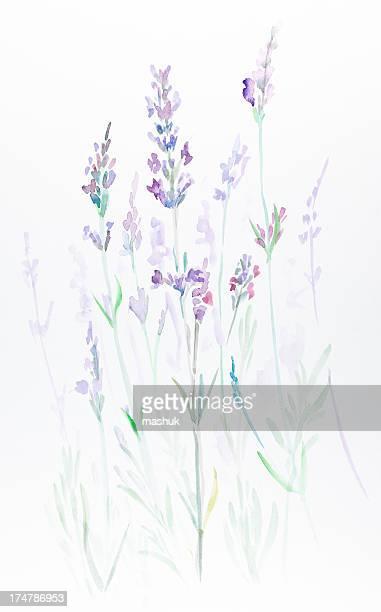 ilustraciones, imágenes clip art, dibujos animados e iconos de stock de sweet lavender - lavanda