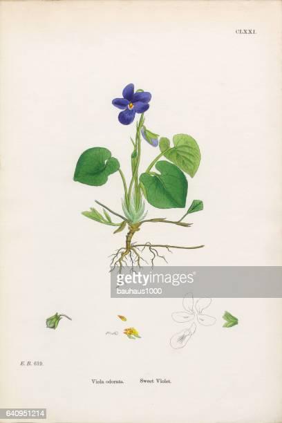 Illustrations Et Dessins Animes De Violette Fleur