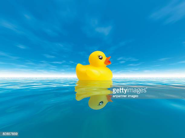 swimming duck in the clear blue sea  - plastic stock illustrations
