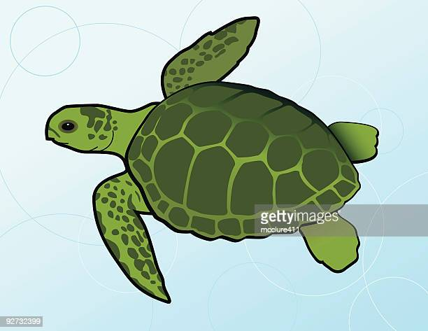Swimming Green Sea Turtle (Chelonia Mydas)