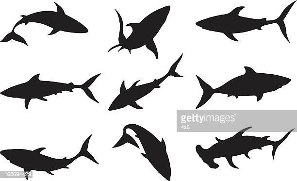 swimming sharks - sharks stock illustrations