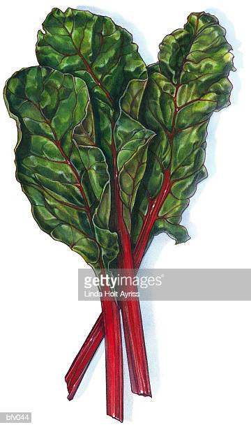 swiss chard - chard stock illustrations, clip art, cartoons, & icons